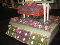 Bags of Grapes Marked with the Food Donation Stickers