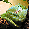 image of snake from Houston Zoo