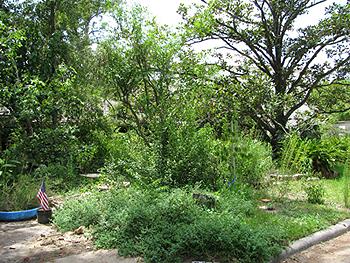 Katy Emde's garden