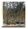 """Last year we told you about an area in North Houston nicknamed the """"Corridor of Cruelty"""". Dead or stray dogs are routinely found in this wooded area. Some are casualties of dog fighting, others unwanted by their owners. Bill Stamps has an update on the situation there."""